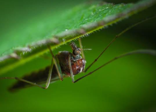 mosquitos repelentes